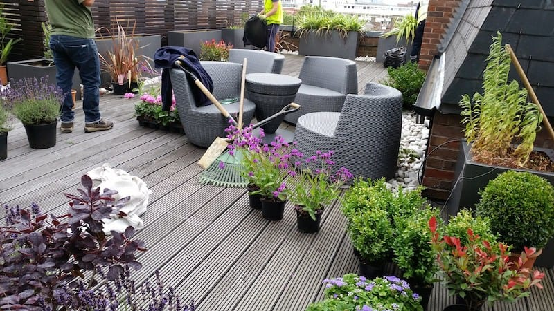 Planting supply for terrace gardens in Central London