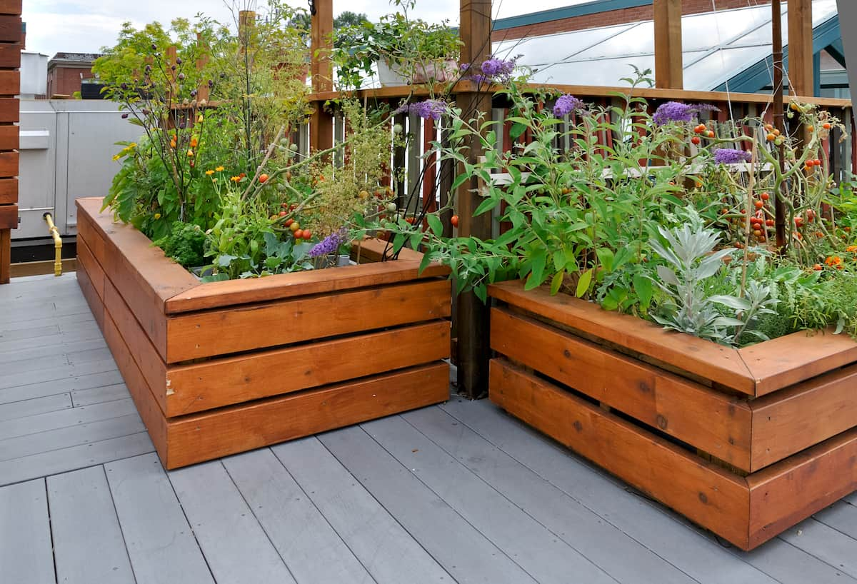 Commercial Rooftop Gardens Image