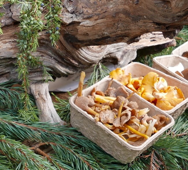 garden trend ideas, foraging wild mushrooms